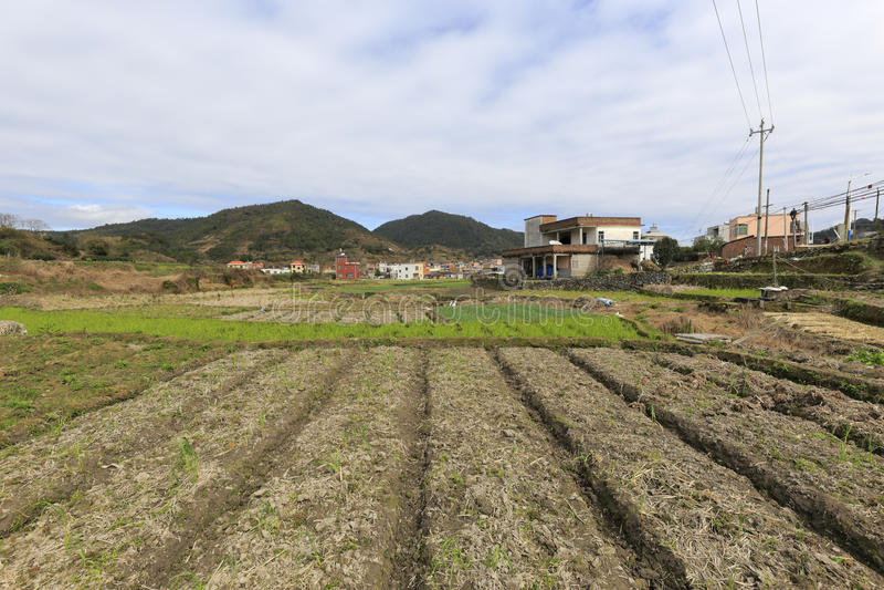De lente keurige landbouwgrond stock foto's