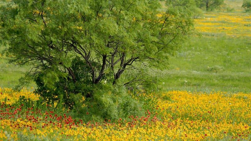 De lente knalt stock foto's