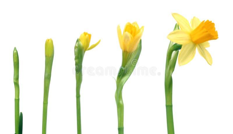 De lente komt royalty-vrije stock foto's