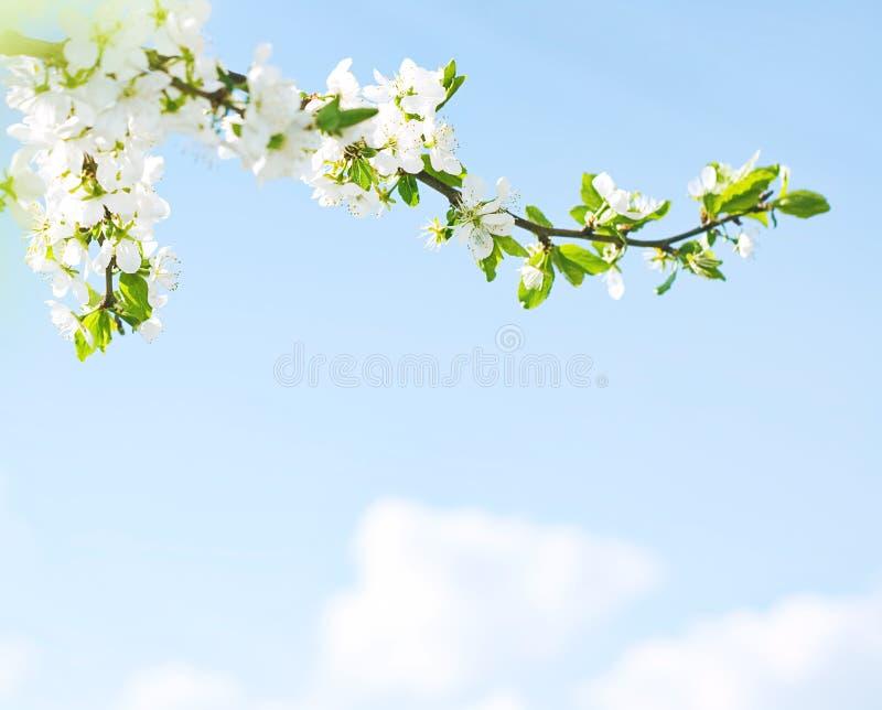 De lente komt terug! stock afbeeldingen