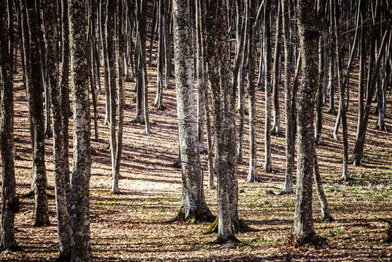 De lente in Krimbergen royalty-vrije stock afbeelding