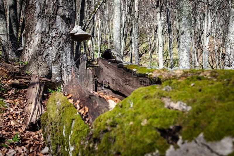 De lente in Krimbergen stock fotografie