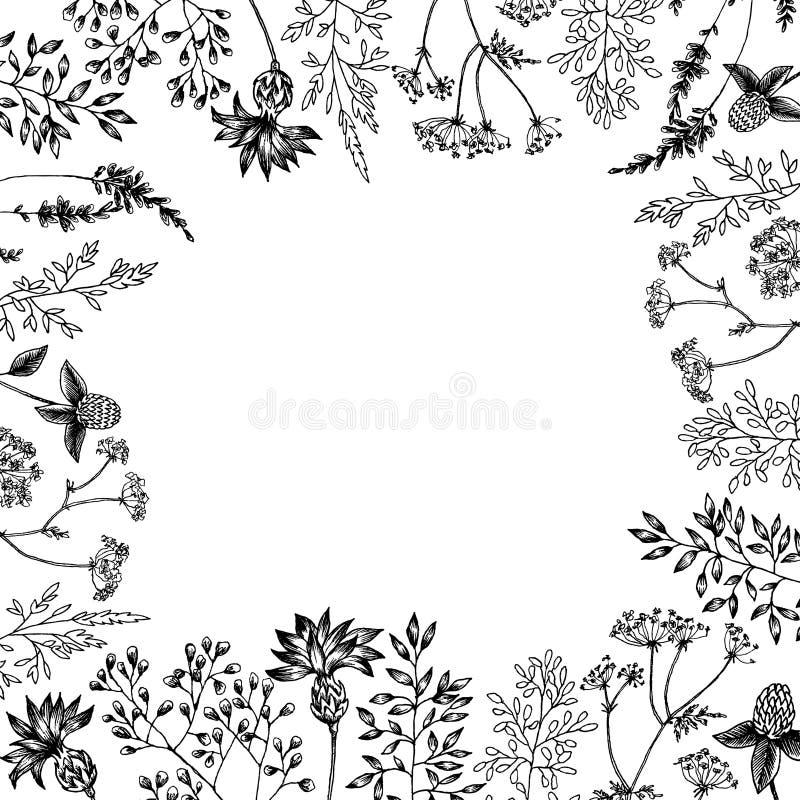 De lente kruidenbloemen met verschillende installaties van uitstekende tuin en bos Vectorontwerp Kan voor groetkaarten gebruiken vector illustratie