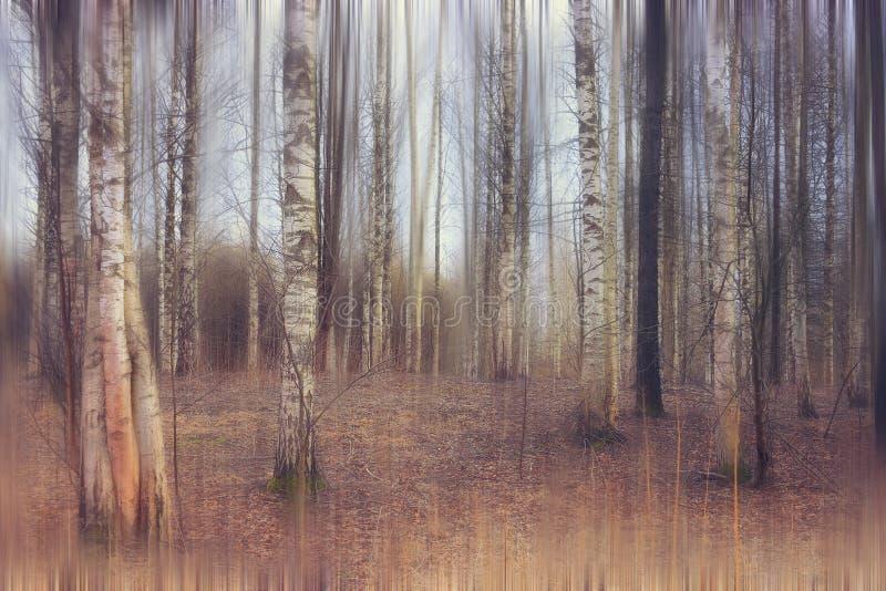 De lente laatste sneeuw in het bos royalty-vrije stock foto's