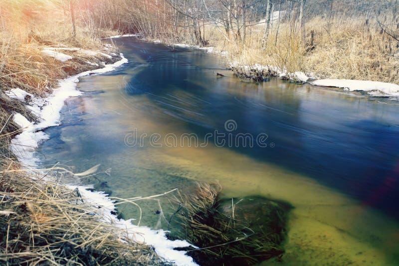 De lente laatste sneeuw in het bos royalty-vrije stock fotografie