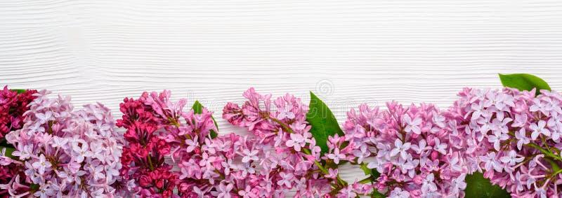 De lente lilac bloemen van de Webbanner op witte houten achtergrond De hoogste vlakke mening, legt, kopieert ruimte stock afbeelding