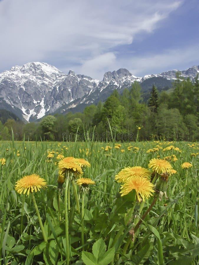 De lente in Lofer-land royalty-vrije stock afbeeldingen