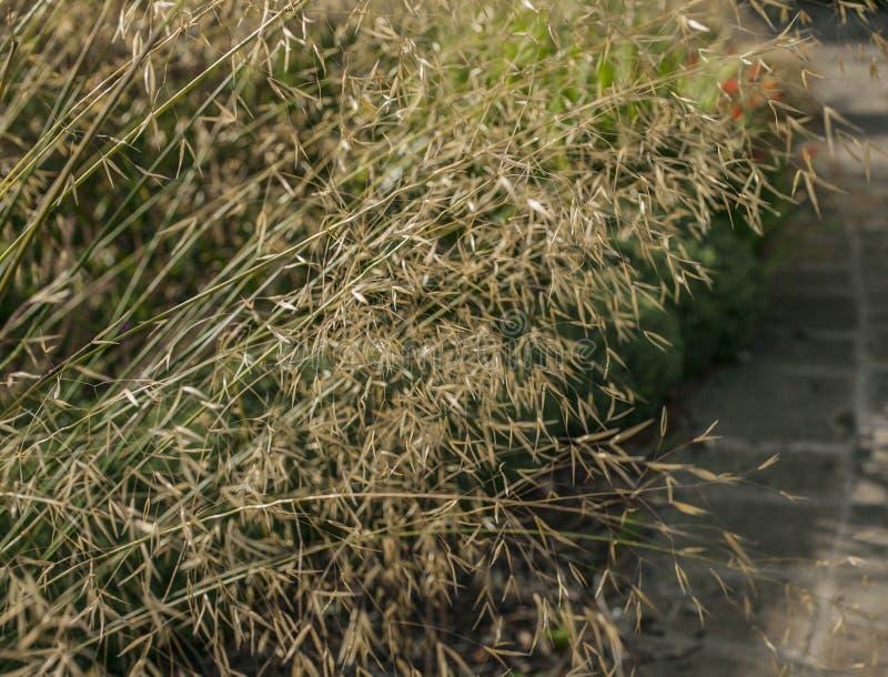 De lente in Londen; gevoelige zonovergoten grasstammen en een weg royalty-vrije stock fotografie