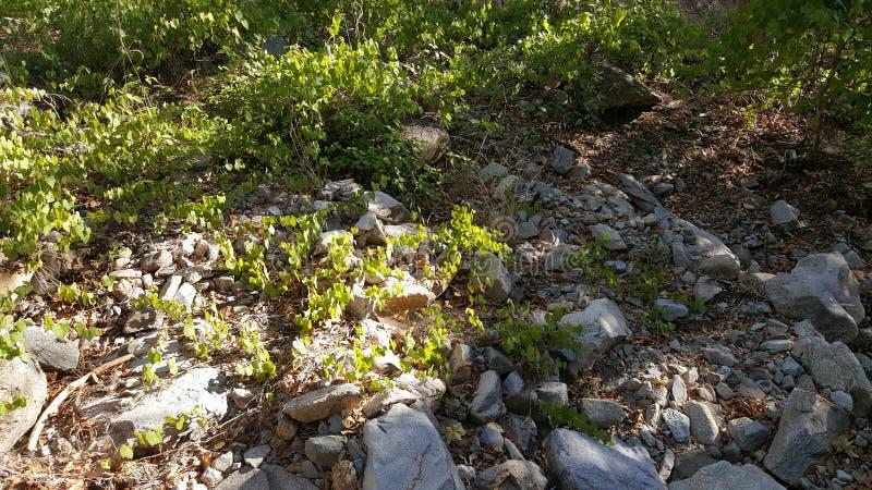 De lente in Madera-Canion stock foto's