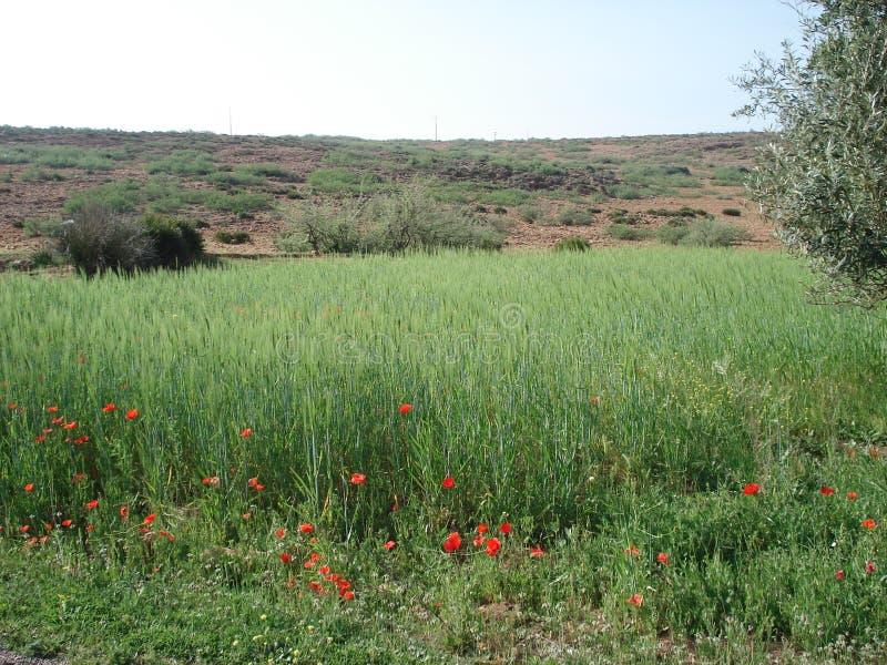 de lente in Marokko stock foto