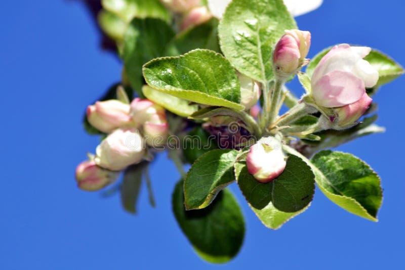 De lente met bloeiende bomen 4 stock afbeeldingen