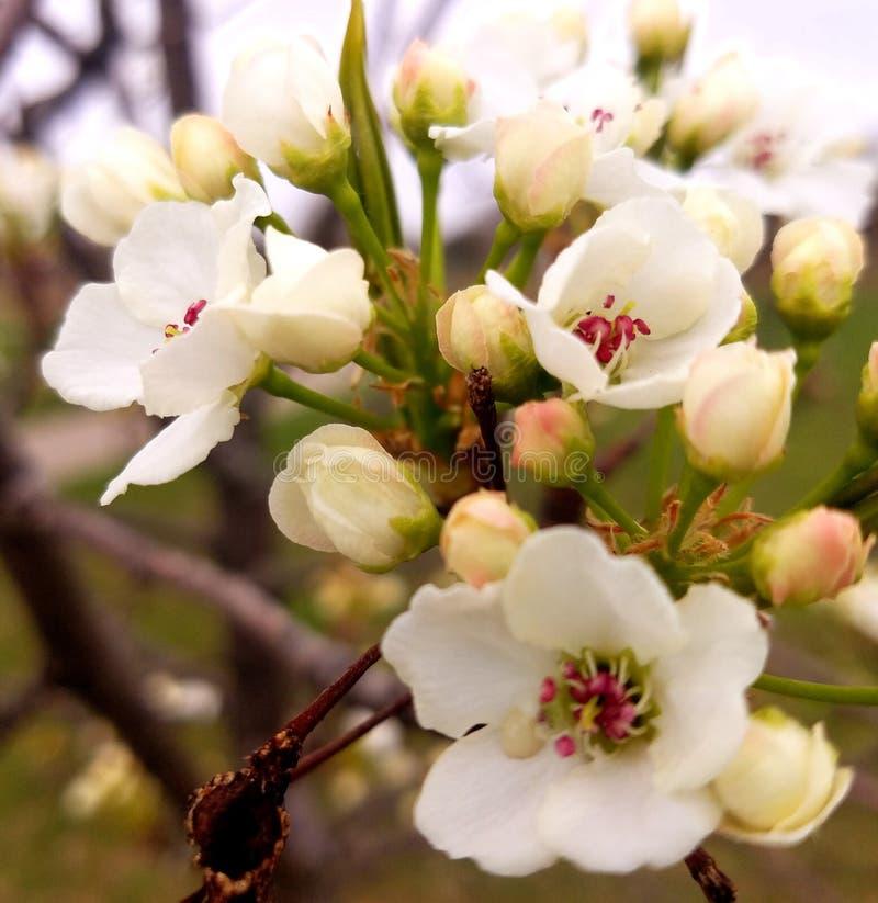 De lente in Michigan royalty-vrije stock afbeeldingen