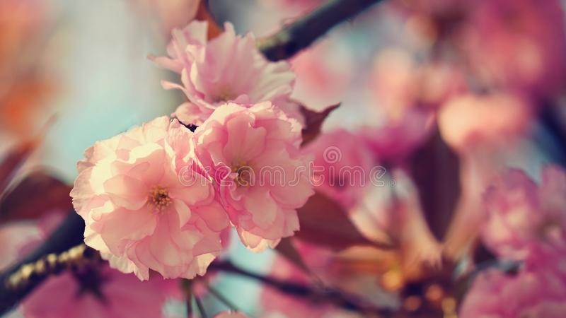 de lente Mooie bloemen de lente abstracte achtergrond van aard Bloeiende takken van bomen voor de kaarten van de de lentegroet me stock afbeeldingen