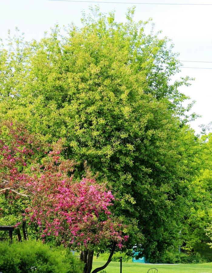 De lente nam toe royalty-vrije stock afbeeldingen