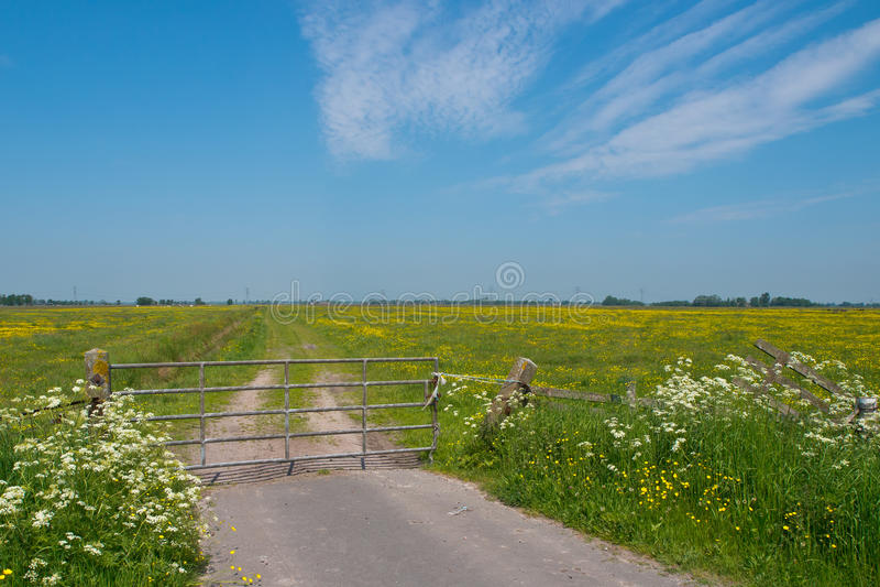 De lente in Nederlandse Weiden stock afbeelding