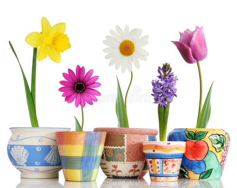 De lente in potten stock foto's