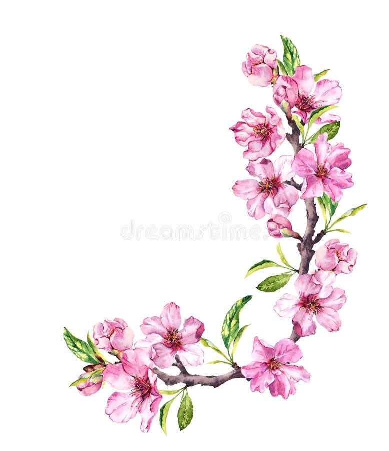De lente roze bloemen - de takken van de kersenbloesem Hoeksamenstelling Bloemenwaterverf stock afbeeldingen