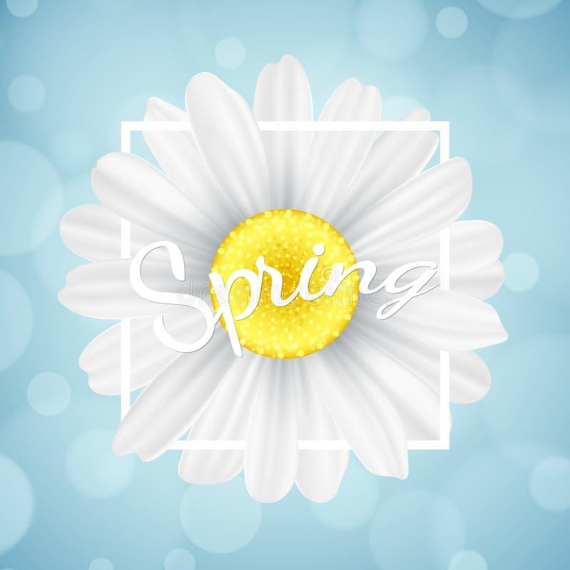 De lente seizoengebonden banner Kamillebloem in wit kader op blauwe achtergrond met lichten bokeh Grafisch voorwerp voor uw ontwe royalty-vrije illustratie