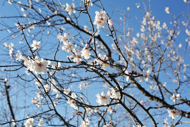 De lente in Spanje stock foto