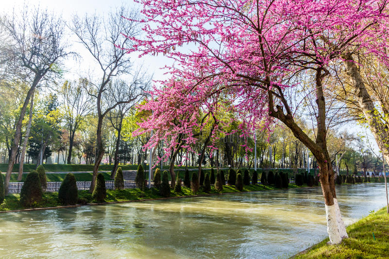 De lente in Tashkent royalty-vrije stock afbeelding