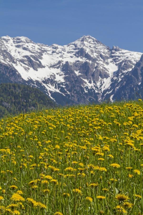 De lente in Tirol royalty-vrije stock fotografie