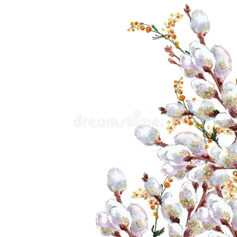 De lente, tot bloei komende pussy-wilg, waterverf vector illustratie