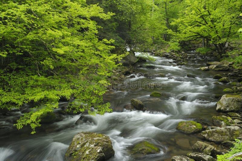 De lente in Tremont bij het Nationale Park van Great Smoky Mountains, TN de V royalty-vrije stock afbeeldingen