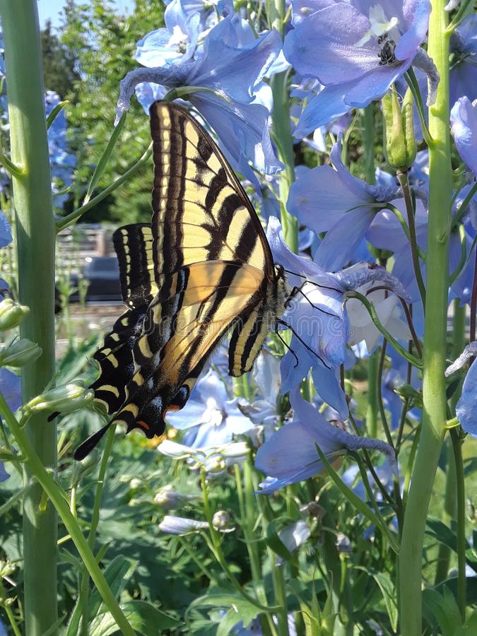 De lente in de tuin stock fotografie