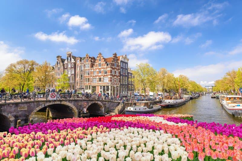 De Lente Tulip Netherlands van Amsterdam royalty-vrije stock afbeelding