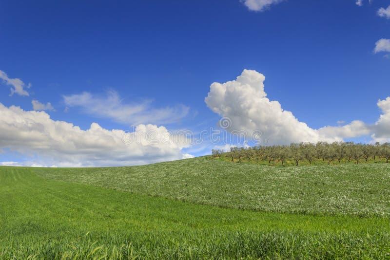 de lente Tussen Apulia en Basilicata: heuvelig landschap met groene cornfields Italië royalty-vrije stock foto