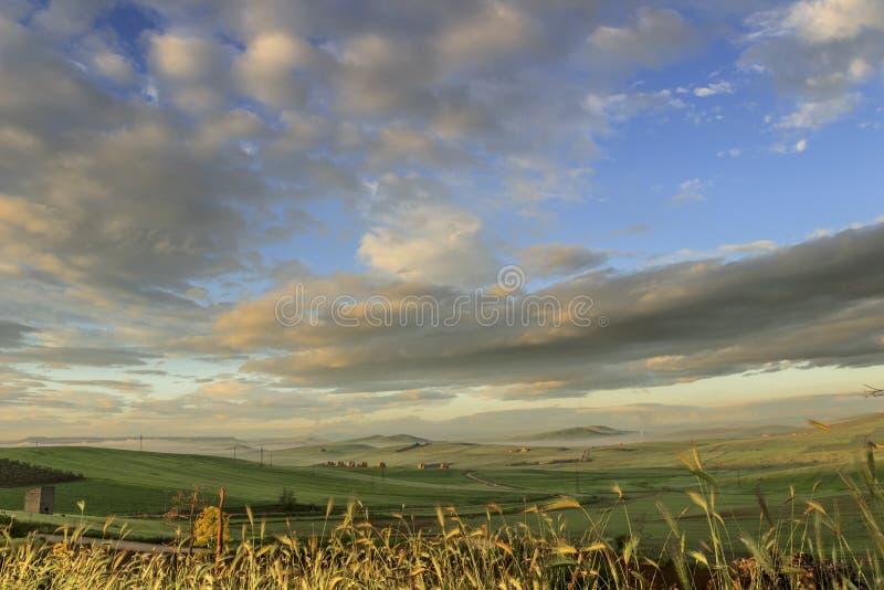 de lente Tussen Apulia en Basilicata: heuvelig landschap met groene cornfields Itali? royalty-vrije stock afbeeldingen