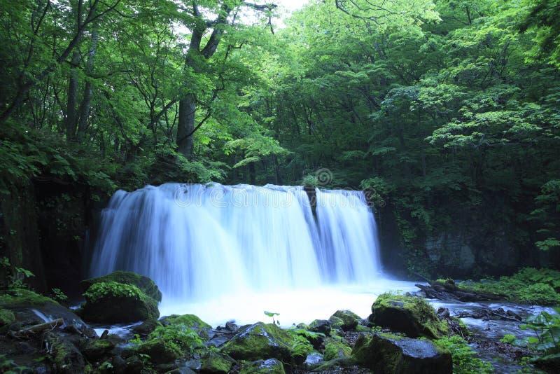 De lente van het water in bos royalty-vrije stock foto