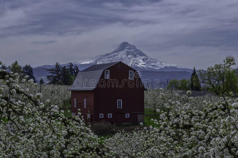 De Lente van Oregon stock afbeeldingen