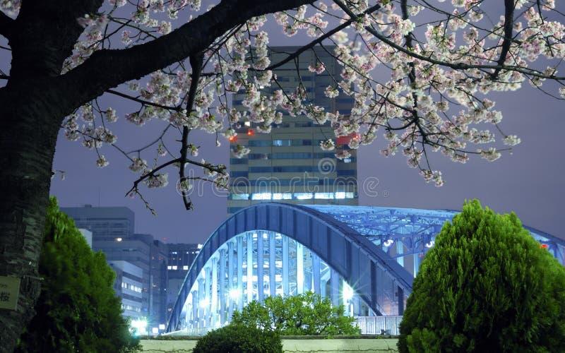De lente van Tokyo stock fotografie