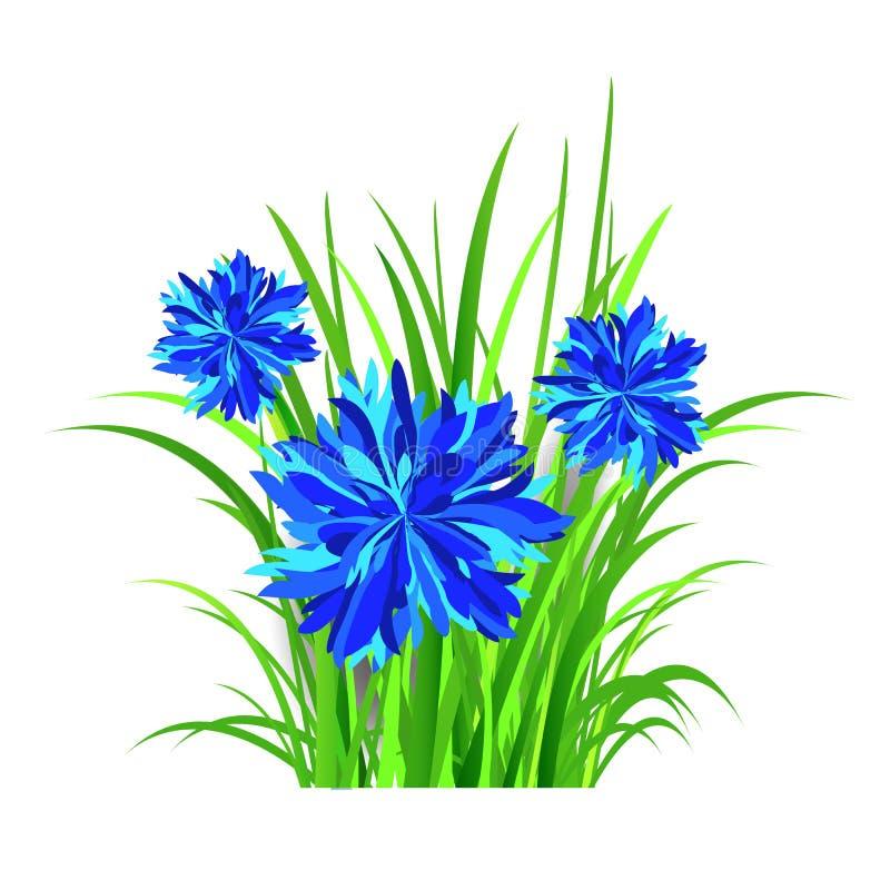 de lente vectorachtergrond met groen gras en blauwe bloemen, korenbloem Vector illustratie stock illustratie