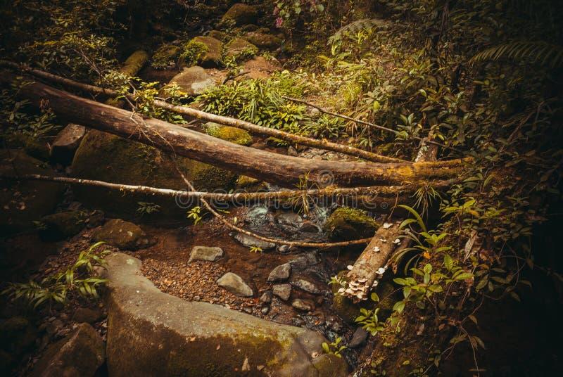 De lente in de wildernis Tropisch het Regenwoudlandschap van het aardregenwoud Maleisië, Azië, Borneo, Sabah royalty-vrije stock foto's