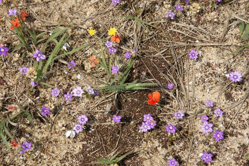 De lente in woestijn 6 royalty-vrije stock fotografie