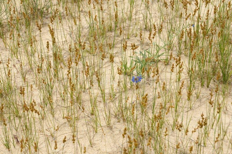 De lente in woestijn 0 stock fotografie