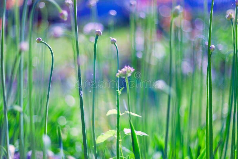 De lente of de zomer abstracte aardachtergrond met gras in de weide royalty-vrije stock afbeelding