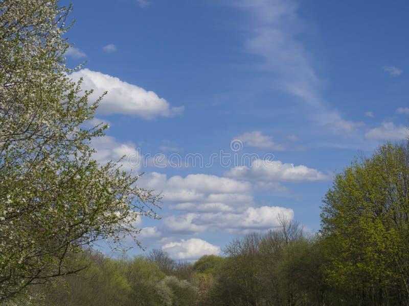 De lente zonnig landschap met bloeiende appelboom, verse weelderige gree royalty-vrije stock afbeeldingen