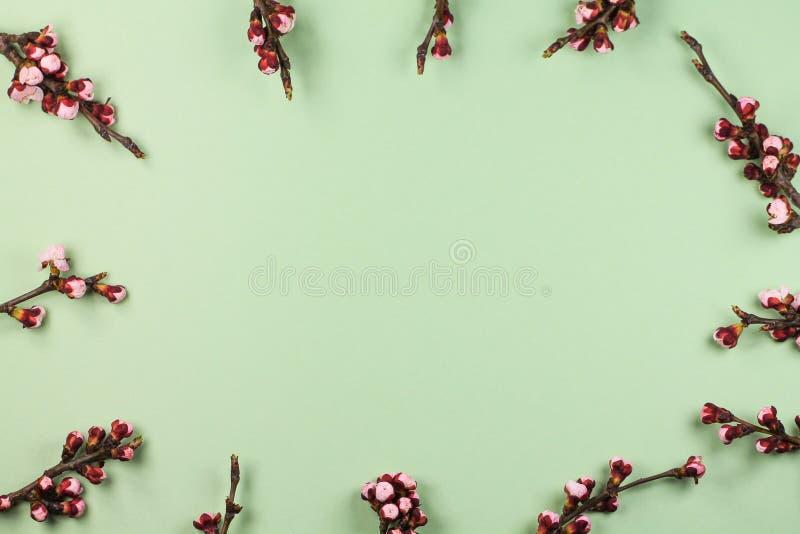 De de lenteachtergrond met bloeiende kersentakjes royalty-vrije stock foto