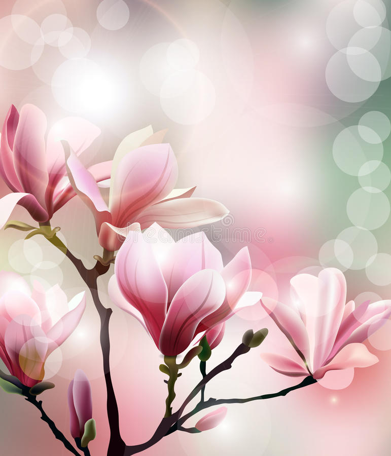 De lenteachtergrond met bloesembrunch van Magnolia met onscherp effect Vector royalty-vrije illustratie
