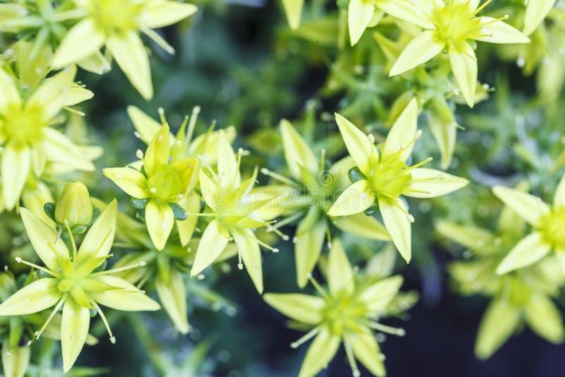 De lenteachtergrond met mooie gele bloemen royalty-vrije stock afbeeldingen