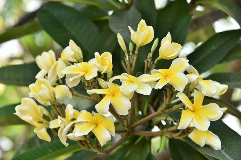 De lenteachtergrond met mooie gele bloemen Gele bloemen op een groene achtergrond stock afbeeldingen