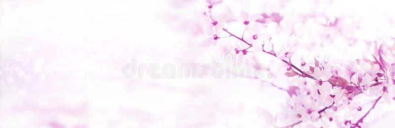 De lenteachtergrond, roze bloesems, banner stock afbeeldingen