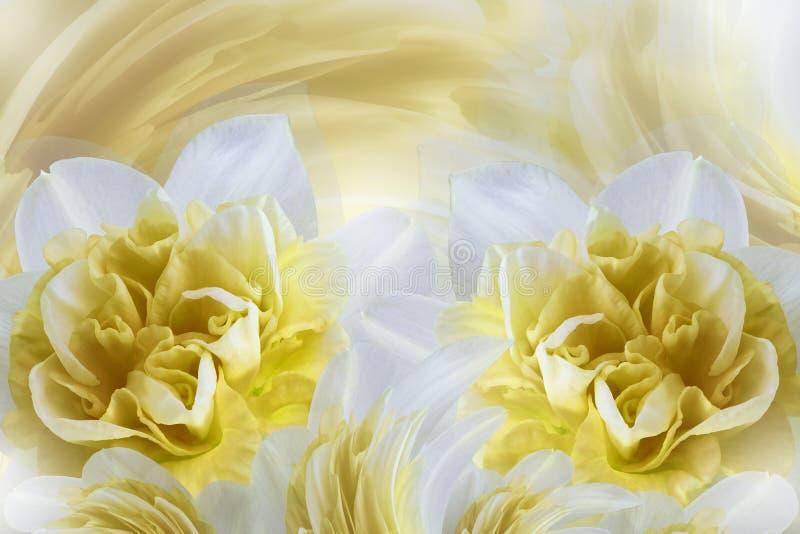 De lenteachtergrond van zacht wit-gele bloemen van narcissuses Close-up royalty-vrije stock afbeeldingen