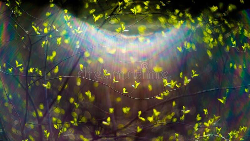 De lentebladeren en zongloed stock foto's