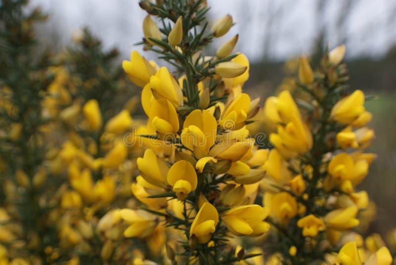 De lentebloei stock afbeeldingen
