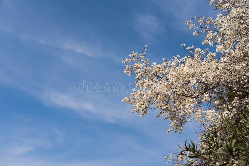 De lentebloei tegen de hemel royalty-vrije stock foto's