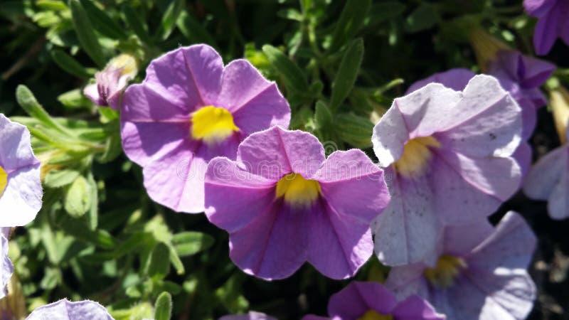 3 de lentebloemen stock foto